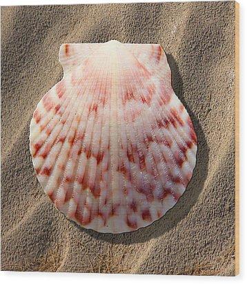 Sea Shell Wood Print by Mike McGlothlen