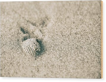 Wood Print featuring the photograph Sea Shell On Beach  by John McGraw