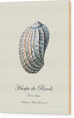 Sea Shell Wood Print by Patruschka Hetterschij