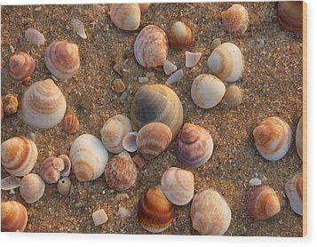 Sea Shells At Sunset Wood Print