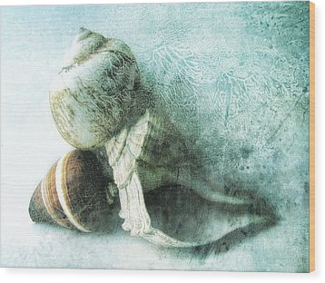 Sea Shells IIi Teal Blue Wood Print by Ann Powell