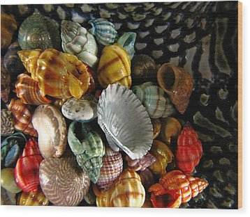 Wood Print featuring the photograph Sea Shells by Lori Miller