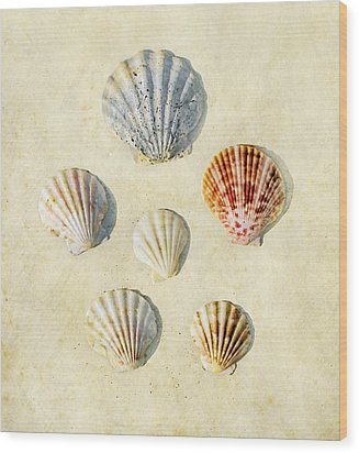 Sea Shells Wood Print by Paul Grand