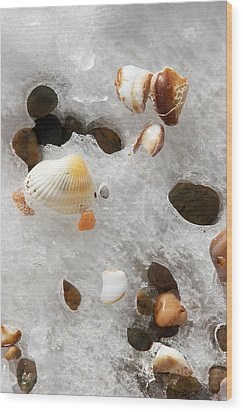 Sea Shells Rocks And Ice Wood Print by Matt Suess