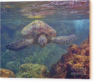 Sea Turtle - Close Up Wood Print