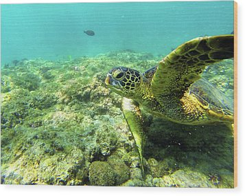 Wood Print featuring the photograph Sea Turtle #2 by Anthony Jones