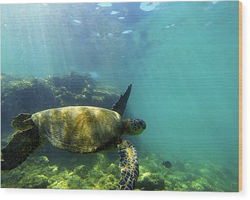 Wood Print featuring the photograph Sea Turtle #5 by Anthony Jones