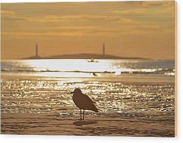 Seagull Admiring Thacher Island Gloucester Ma Good Harbor Beach Wood Print