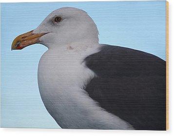 Seagull Wood Print by Aidan Moran