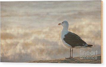 Seagull At Sunrise Wood Print