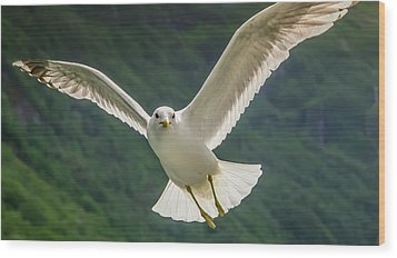 Seagull At The Fjord Wood Print