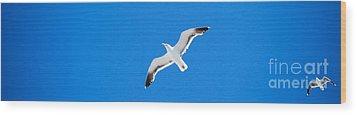 Seagull Blue Wood Print by Cesar Marino