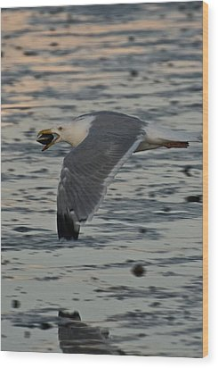 Seagull Cracking Open A Clam Wood Print by Gene Sizemore