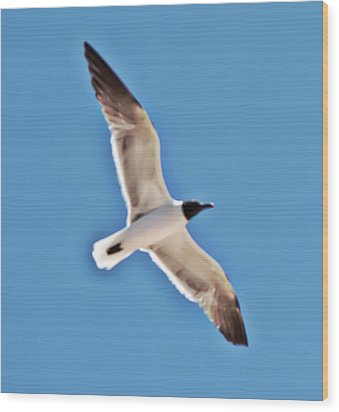 Seagull In Flight Wood Print by Gina O'Brien