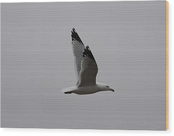 Seagull In Flight Wood Print by Richard Mitchell