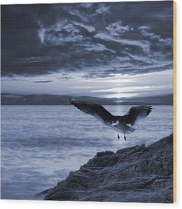 Seagull Wood Print by Jaroslaw Grudzinski