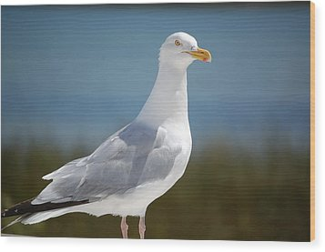 Seagull Wood Print by Lisa Patti Konkol