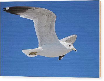 Seagull Wood Print by Ludwig Keck