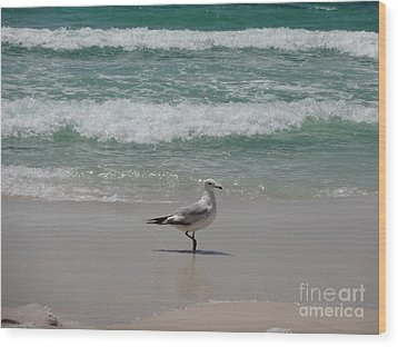 Seagull Wood Print by Megan Cohen
