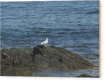 Wood Print featuring the digital art Seagull On The Rocks by Barbara S Nickerson