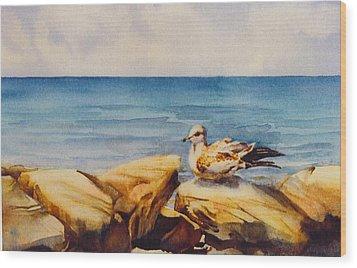 Seagull-on-the-rocks Wood Print by Nancy Newman