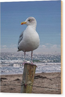 Seagull On The Shoreline Wood Print