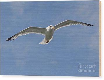 Seagull Patrol Wood Print by Steev Stamford