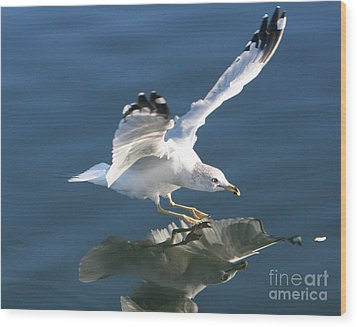 Seagull Reflection Wood Print by Rod Jellison