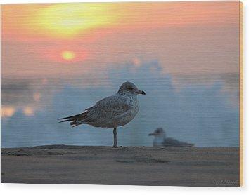 Seagull Seascape Sunrise Wood Print