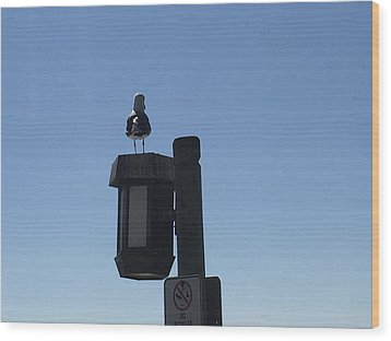 Seagull Sentry Wood Print by Russell Keating