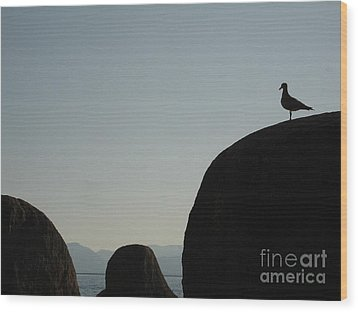 Seagull Silhouette Wood Print by Silvie Kendall