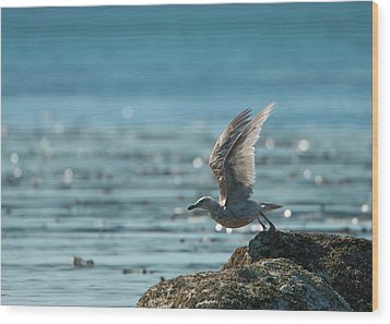 Seagull Takeoff Wood Print