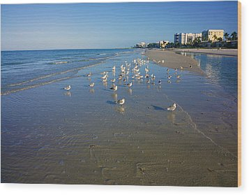 Seagulls And Terns On The Beach In Naples, Fl Wood Print by Robb Stan