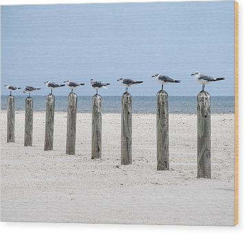 Seagulls  Wood Print