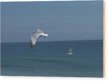 Seagulls In Flight Wood Print
