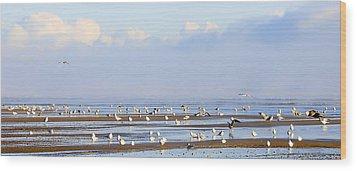 Seagulls On A Beach Wood Print by Svetlana Sewell