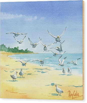 Seagulls Wood Print by Ray Cole