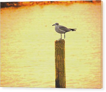 Seagulls Sunset Wood Print by Laura Brightwood