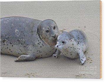 Seal Baby  Wood Print by Judy Grant