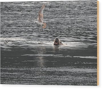 Sealion Vs Seagull Wood Print