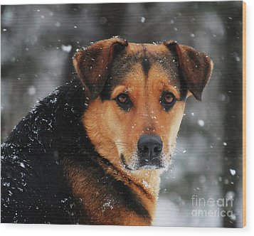 Wood Print featuring the photograph Search And Rescue Dog by Lila Fisher-Wenzel