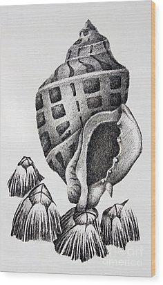 Seashell And Barnacles Wood Print by James Williamson