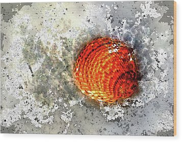 Seashell Art  Wood Print