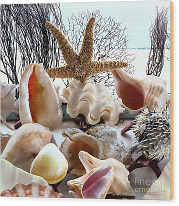Seashell Galore Wood Print