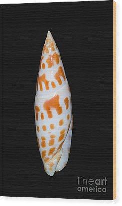 Seashell In Fishnet Wood Print by Bill Brennan - Printscapes