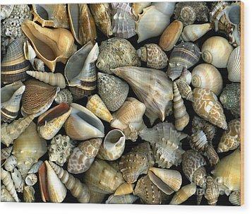 Seashell Medley Wood Print by Christian Slanec