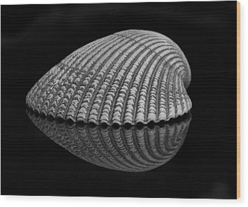 Seashell Study Wood Print