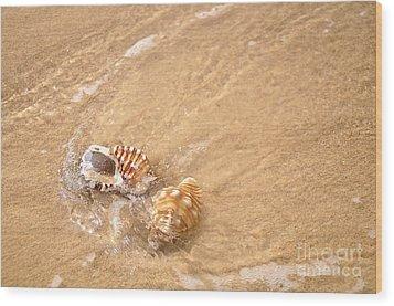 Seashell Turbulence Wood Print by Kaye Menner