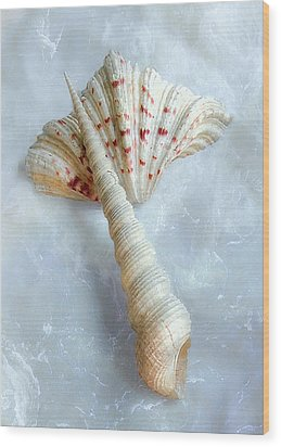 Wood Print featuring the photograph Seashells #2  by Louise Kumpf