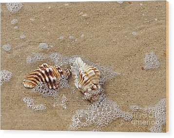 Seashells And Bubbles 2 Wood Print by Kaye Menner